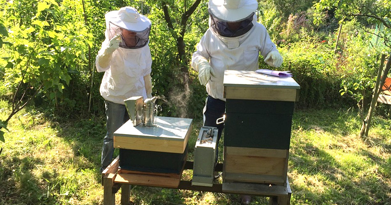 Beekeeping At Home