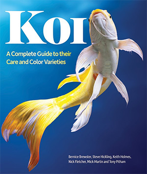 10 best books on koi ponds raising koi fish full home for Koi fish care